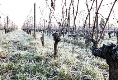 Vignes pendant l'hiver, neige, froid, soleil, levé