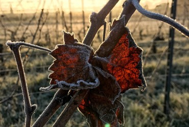 Vignes pendant l'hiver au Vignobles BArdet
