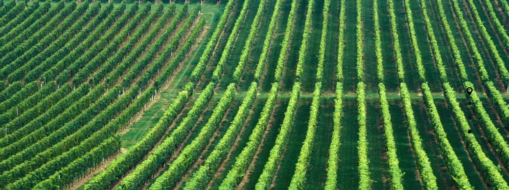 La Fabrication de levure au coeur des Vignobles Bardet, Saint-emilion grand cru