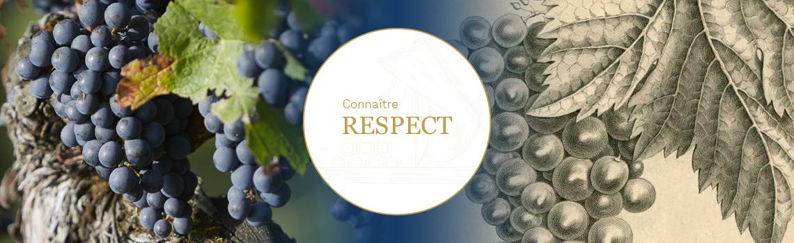 Le respect de la vigne - HVE 3